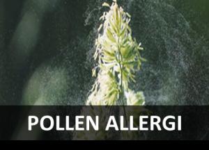 pollen allergi